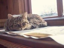 Katten sover på fönstret Arkivbilder