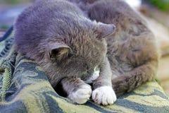 Katten sover på filten royaltyfria foton