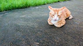 Katten sover på mortelgolv med gräsbakgrundsallmänhet parkerar arkivbilder