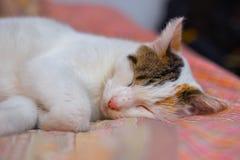 Katten sover på sängen Arkivfoto