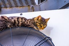 Katten sover fotografering för bildbyråer