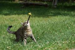 Katten spelar med en fjäder i gården royaltyfri foto