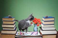 Katten spelas med den flotta musen Arkivbild