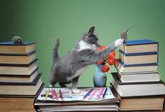 Katten spelas med den flotta musen Arkivfoto