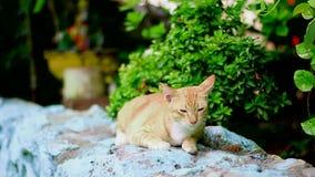 Katten squatting i Thailand lager videofilmer