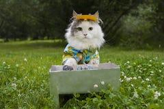 Katten steker kebab på naturen royaltyfria foton