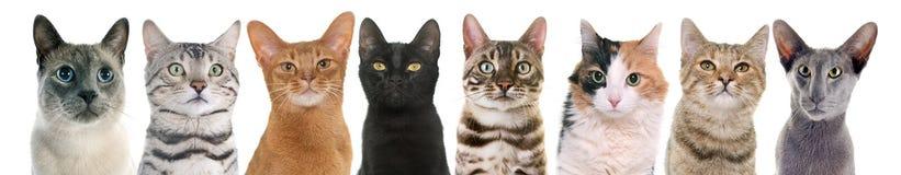 Katten in studio royalty-vrije stock foto's