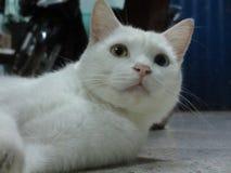 Katten synar Arkivbild