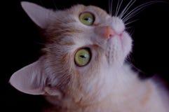 Katten synar Fotografering för Bildbyråer