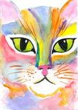 Katten synar Royaltyfri Fotografi