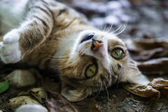 Katten synar Royaltyfri Bild