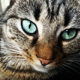 Katten synar Arkivfoton