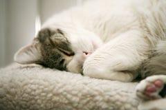 katten ta sig en tupplur Royaltyfri Bild