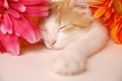 katten ta sig en tupplur Royaltyfri Fotografi