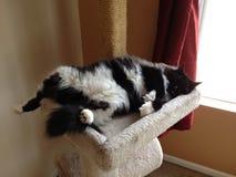 Katten ta sig en tupplur Arkivfoton