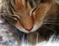 Katten ta sig en tupplur Royaltyfria Bilder