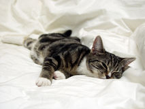 katten ta sig en tupplur Arkivfoto