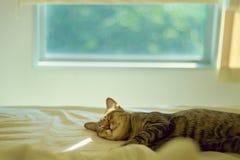 Katten ta sig en tupplur på säng Arkivbild