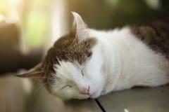 Katten ta sig en tupplur sova på det varma bilslutet upp fotoet Royaltyfri Foto