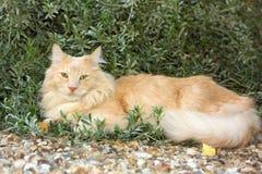 katten ta sig en tupplur tid Royaltyfri Foto