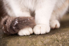 Katten tafsar Royaltyfria Bilder