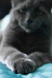 Katten tafsar i förgrunden Royaltyfri Bild