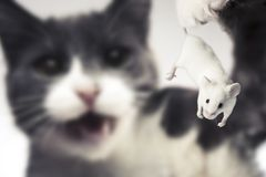 katten äter holdingmusen till Royaltyfria Foton