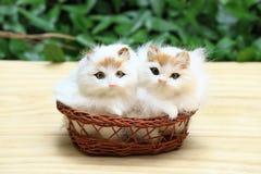 Katten två i korgen Royaltyfri Foto