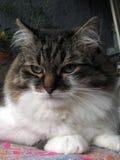 Katten tycker om balkongen Arkivbild