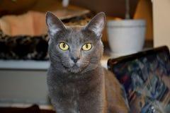 Katten tystar ned närbild royaltyfri bild