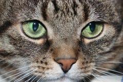 katten tystar ned s Arkivbilder