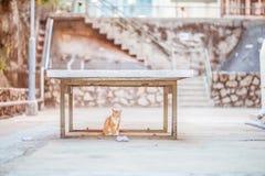 Katten uder lijst Royalty-vrije Stock Fotografie