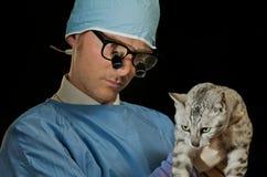katten undersöker veterinären Arkivbild