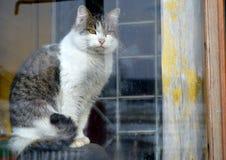 Katten utanför fönstret Arkivbild
