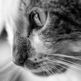 Katten vänder mot Royaltyfri Fotografi