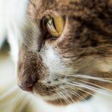 Katten vänder mot Royaltyfri Bild