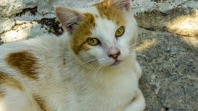 Katten vänder mot Royaltyfri Foto