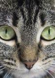 Katten vänder mot Fotografering för Bildbyråer