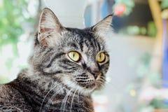 Katten vänder mot Royaltyfria Foton