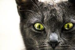 Katten vänder mot Arkivbilder