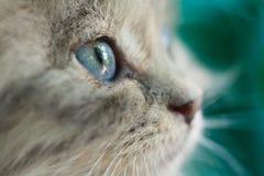 Katten vänder mot Royaltyfria Bilder