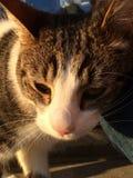 Katten vänder mot Arkivbild