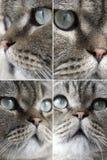 katten vänder olikt mot arkivfoton