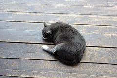 Katten värma sig i solen på trägolvet Fotografering för Bildbyråer
