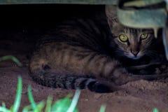 Katten verbergende plaats Stock Foto