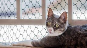 Katten vid ett fönster, gröna ögon öppnar Royaltyfria Bilder