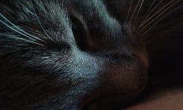 Katten vilar arkivbilder