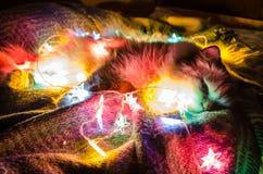 Katten vilar i en glödande julgirland arkivbilder