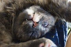 Katten vilar i stol Royaltyfri Fotografi