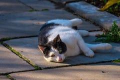 Katten vilar på gatan royaltyfria bilder